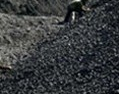 China demand for Coking Coal may remain flat, India weak in Nov 13
